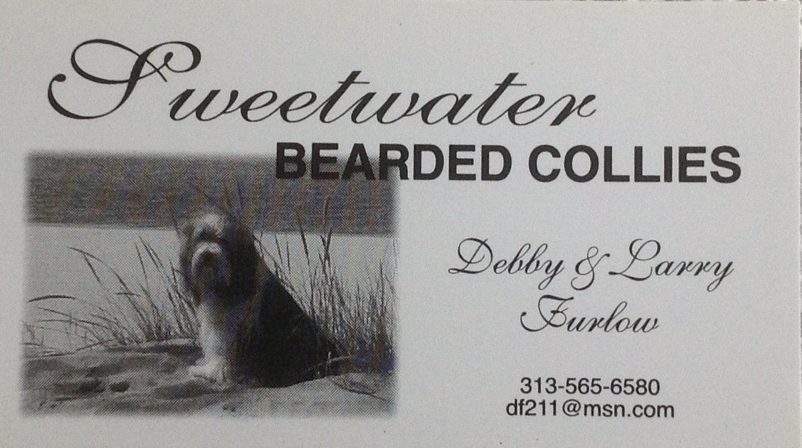sweetwater2 bearded collie club of america. Black Bedroom Furniture Sets. Home Design Ideas